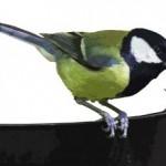 Prečo kŕmiť vtáčiky?