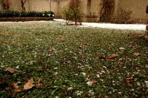 Milosrdný sneh